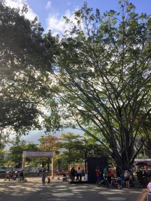 Olha que lindo o Parque das Figueiras